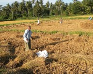 Harvest Time and the Maalu Man 12