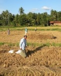 Harvest Time and the Maalu Man 13
