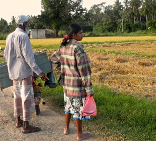 Harvest Time and the Maalu Man 22