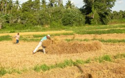 Harvest Time and the Maalu Man 7