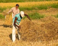 Harvest Time and the Maalu Man 8