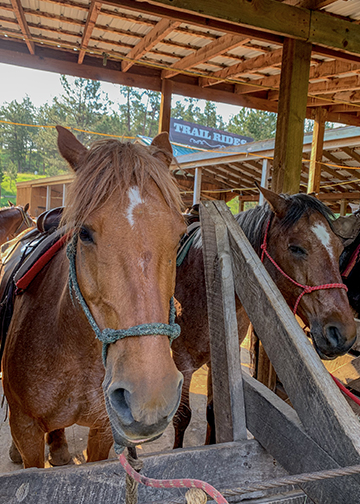 The Stables at Palmer Gulch Horses