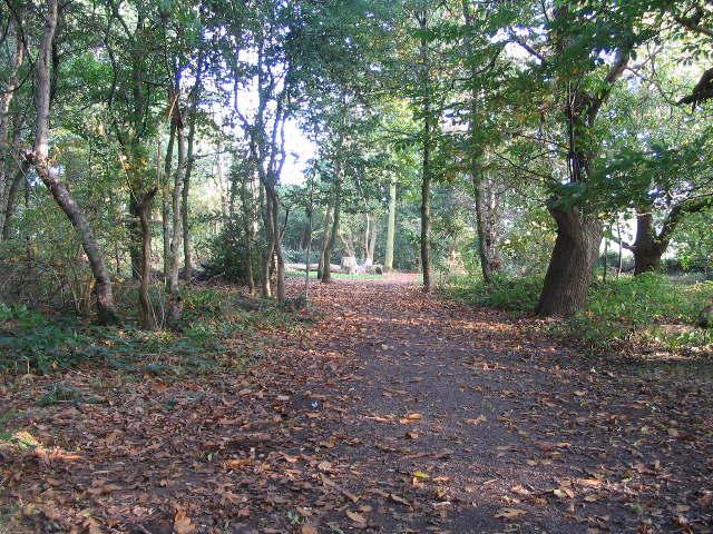 Crackley Woods