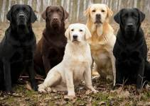 Waterfowl Hunting Dogs