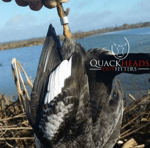 Louisiana Duck Hunting guides