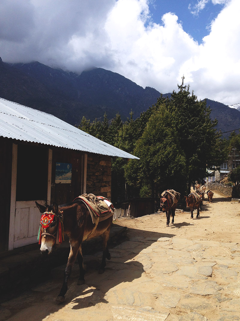 mule train village everest base camp trek mountains