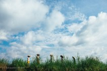 Burmese people coming and going to the five-day market on Inle Lake. Myanmar, May 2014.