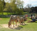 firle-garden-show-horses