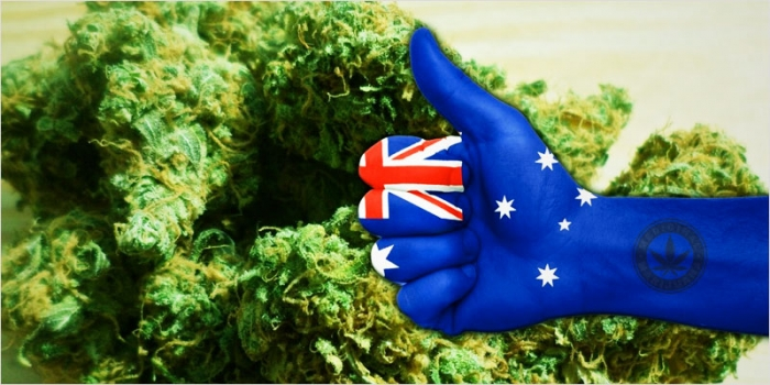 An insider's look at Australia's new MMJ market: Q&A with consultant Adam Miller