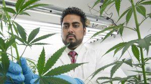 10 pot-repreneurs disrupting marijuana's white male monopoly