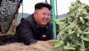North Korea has a cannabis culture