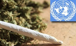 United Nations Panel Releases First-Ever Review of Marijuana