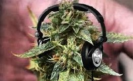How legal weed will affect the Canadian music industry