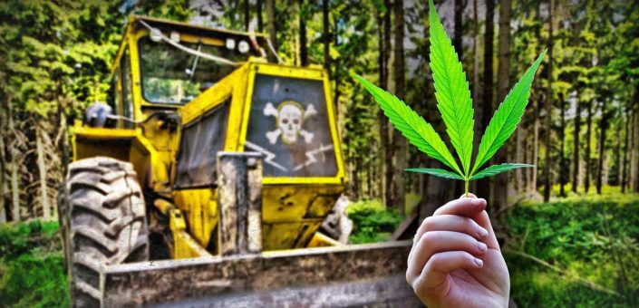 Police chase down cannabis suspect with bulldozer, suspect dead … for 10 plants
