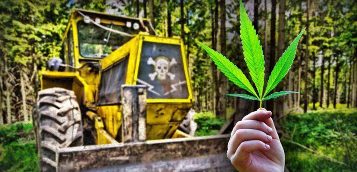 Bulldozer crushing of marijuana grower was an accident, Berks County DA says