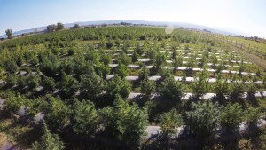 Hemp fills gaps in the Western Slope's orchards and vineyards