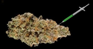 Investors rush to patent genetically modified cannabis molecules