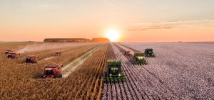 Lawmakers Reach Farm Bill Deal, Hemp Legalization Incoming