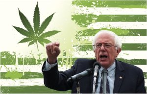 Where Presidential Candidate Bernie Sanders Stands On Marijuana