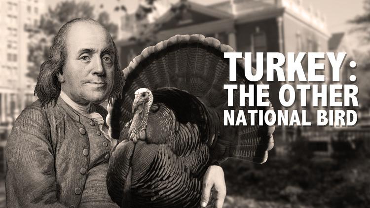 LaughingHistorically-TurkeyTheOtherNationalBird122