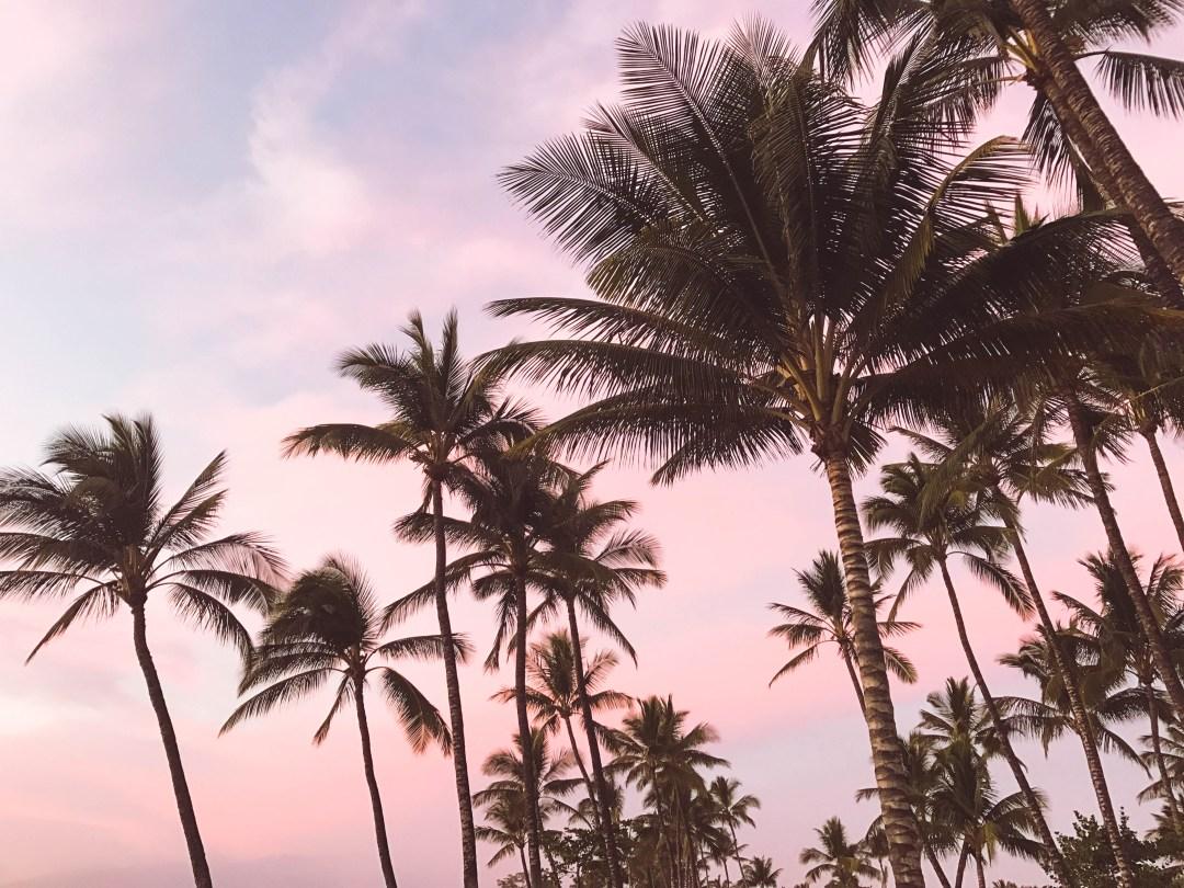 maui, sunset, honeymoon, hawaii, palm trees