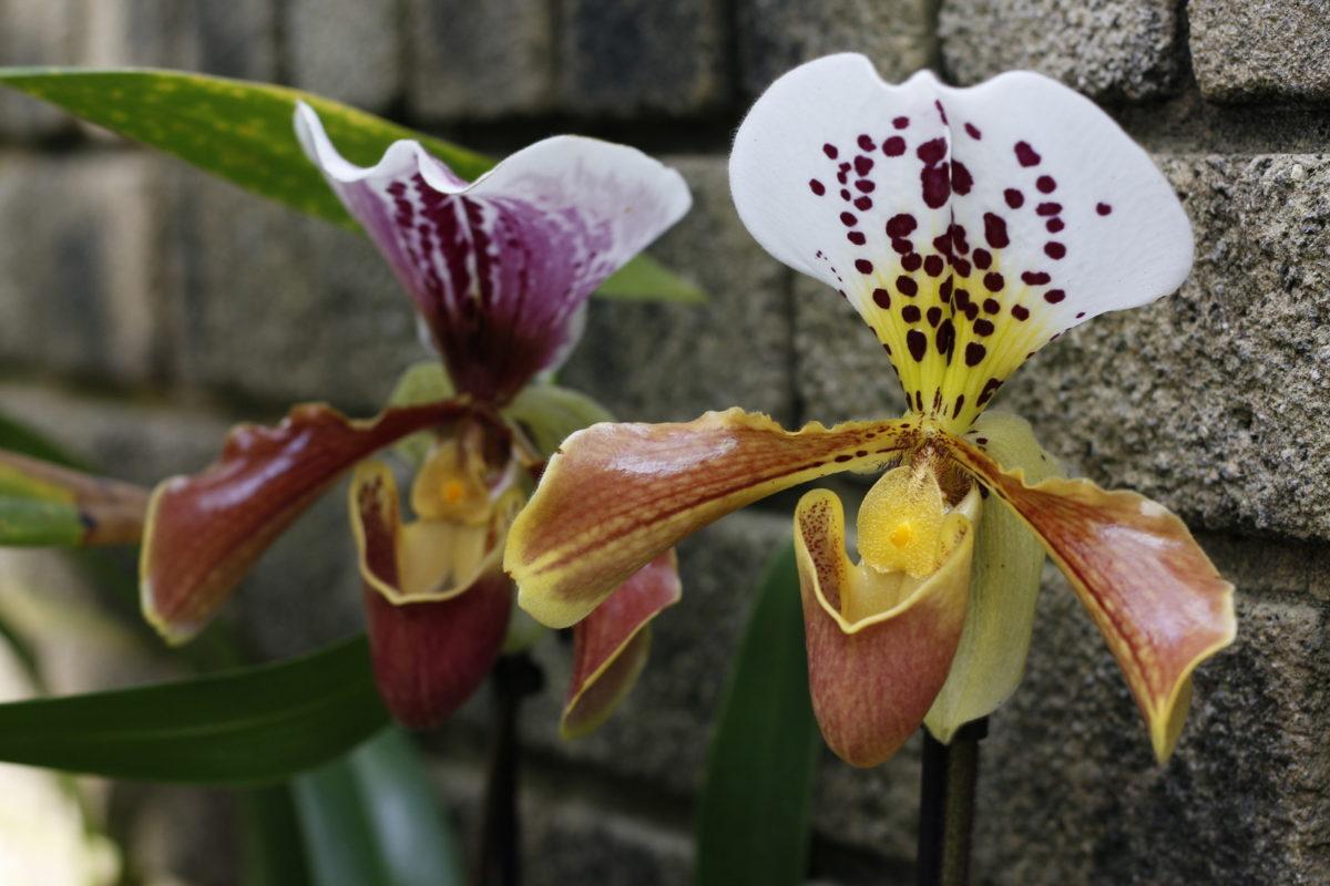 30 Best Botanical Gardens in Europe :: best flower gardens in Europe :: Best gardens to see in Europe