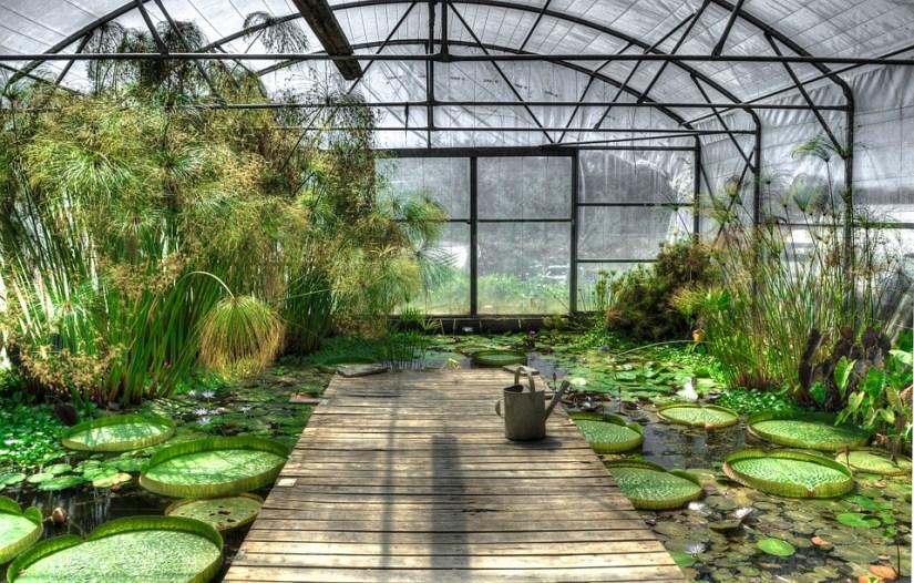 greenhouse2-pixabay