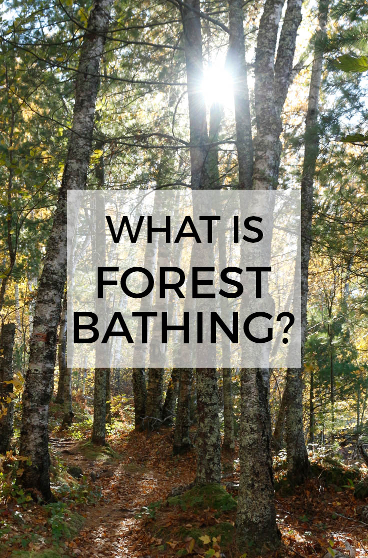 WHAT IS FOREST BATHING? How (and Why) to Try Forest Bathing : The Benefits of Shinrin-yoku