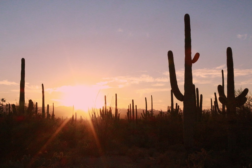 There are many things to do in Saguaro National Park including hiking, cycling and photography. The city of Tucson also has fantastic places to eat and drink.