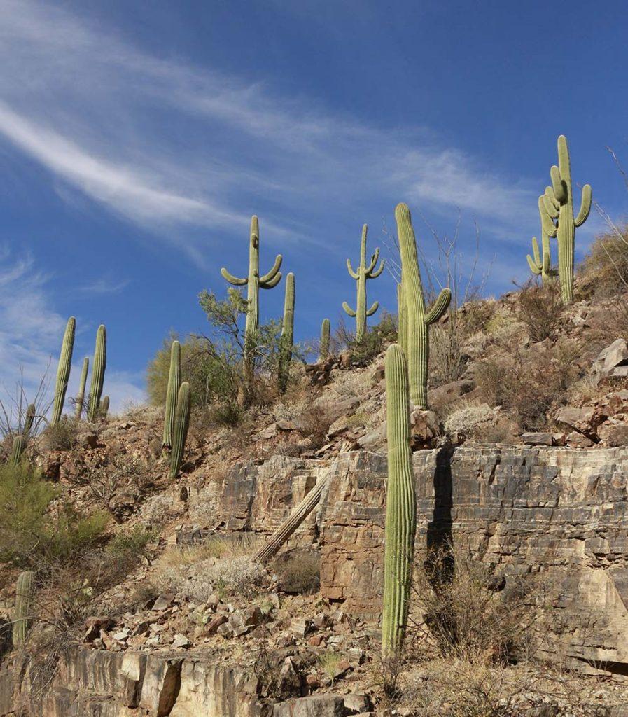Things to Do in Saguaro National Park : Weekend Guide to Saguaro National Park : Best things to do and see Arizona