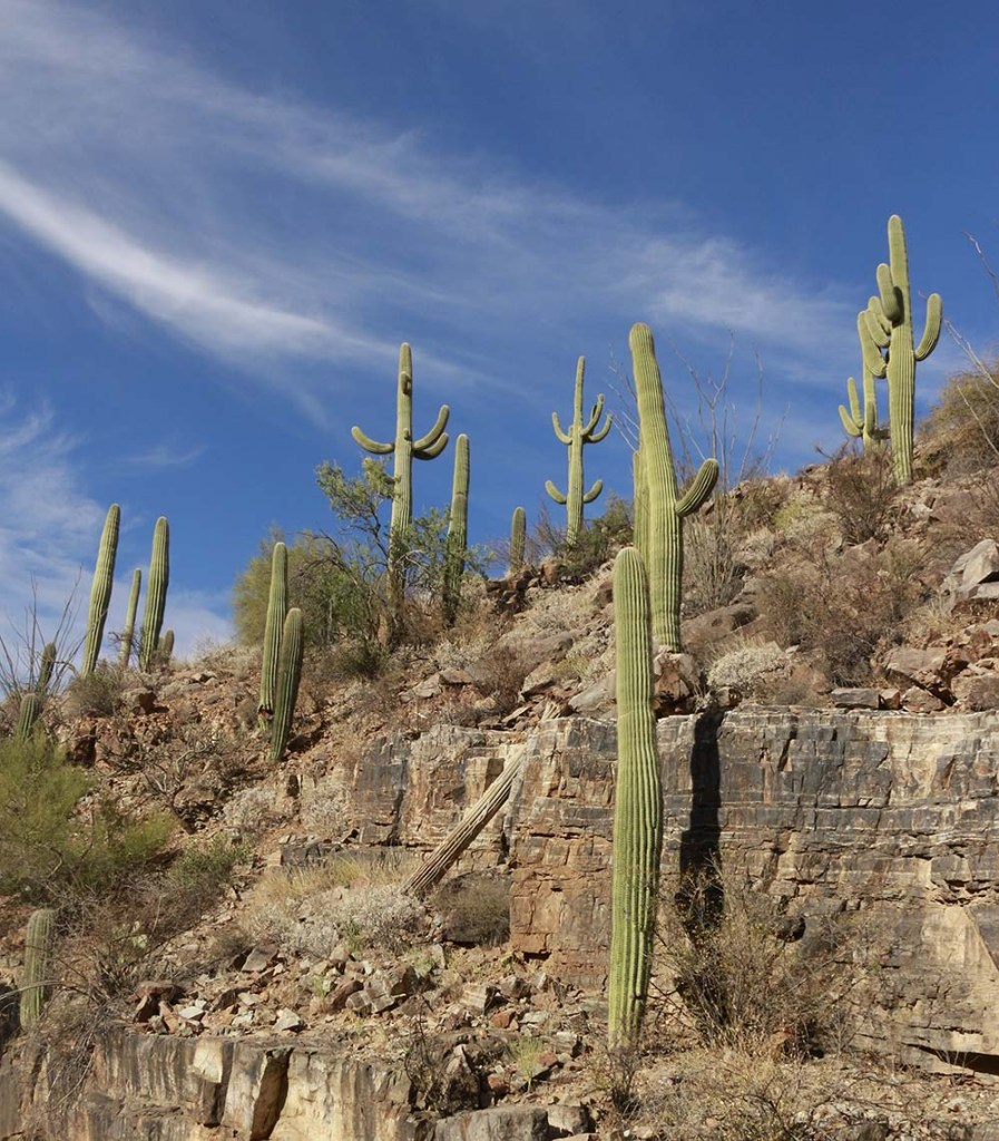 Things to Do in Saguaro National Park : Weekend Guide to Saguaro National Park : Best things to do and see Arizona