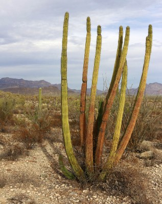 Guide to Organ Pipe Cactus National Monument