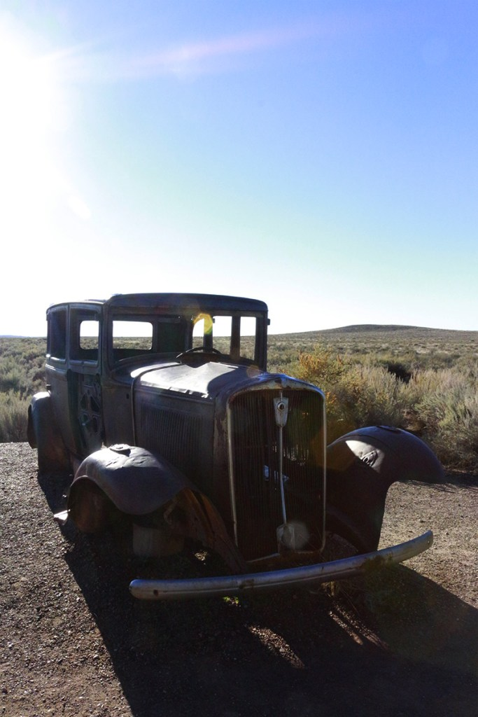 Guide to Petrified Forest National Park: trees turned to stone in a colorful desert landscape