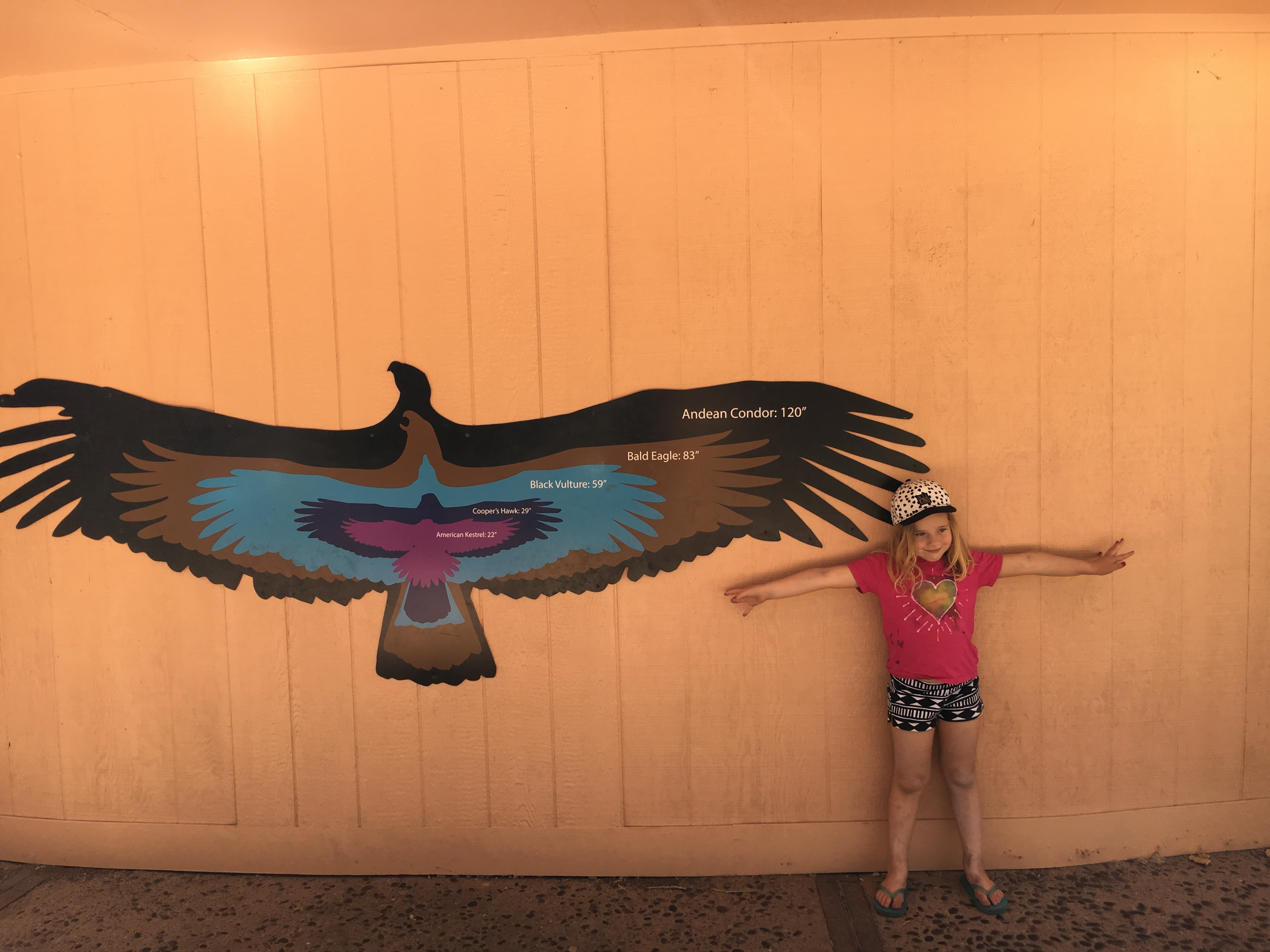 kids' activities at ABQ BioPark Zoo eagle arms