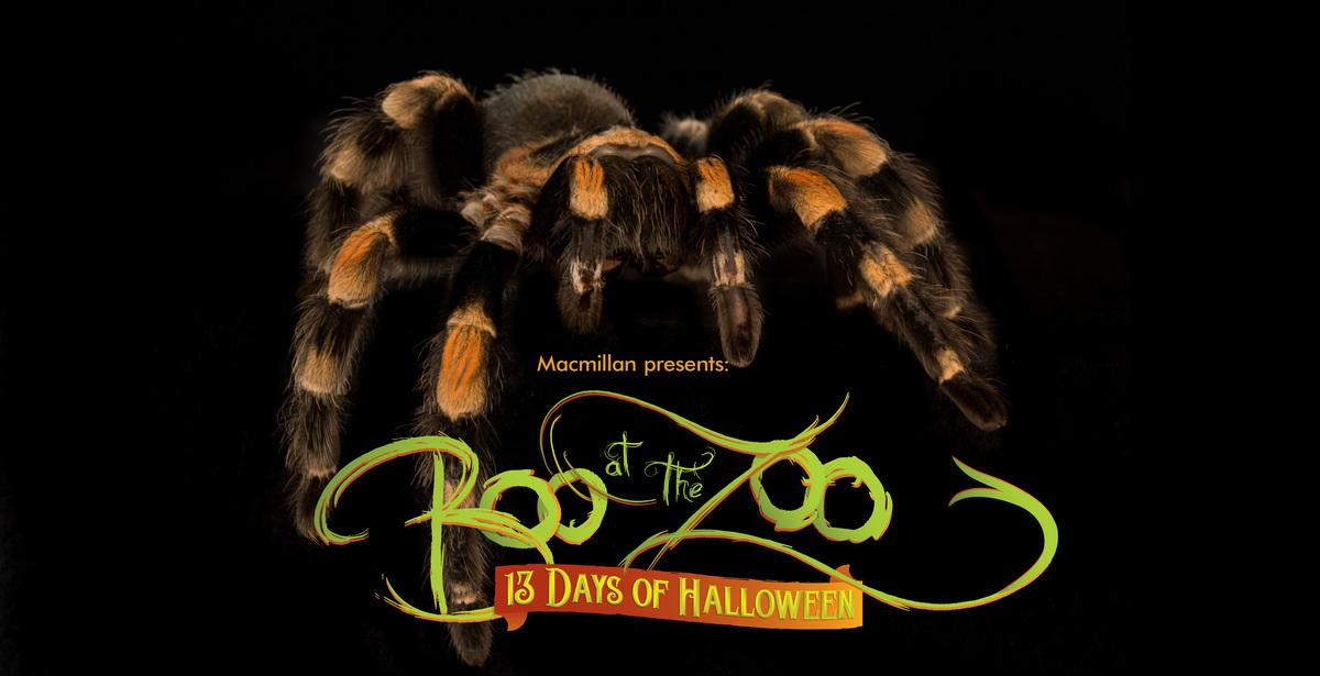 Boo at the Zoo at the Bronx Zoo