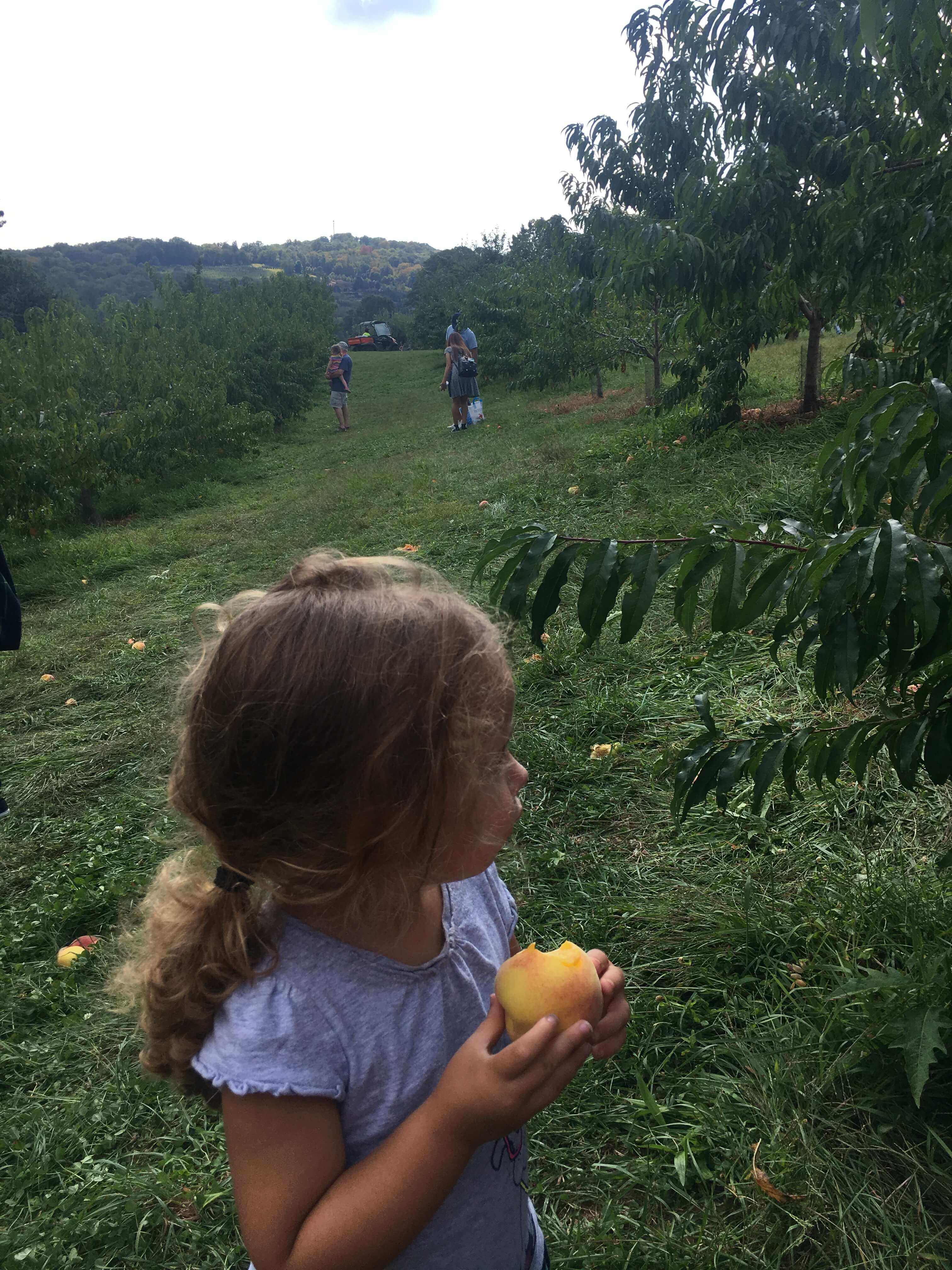 yummy peaches at harvest moon and orchard