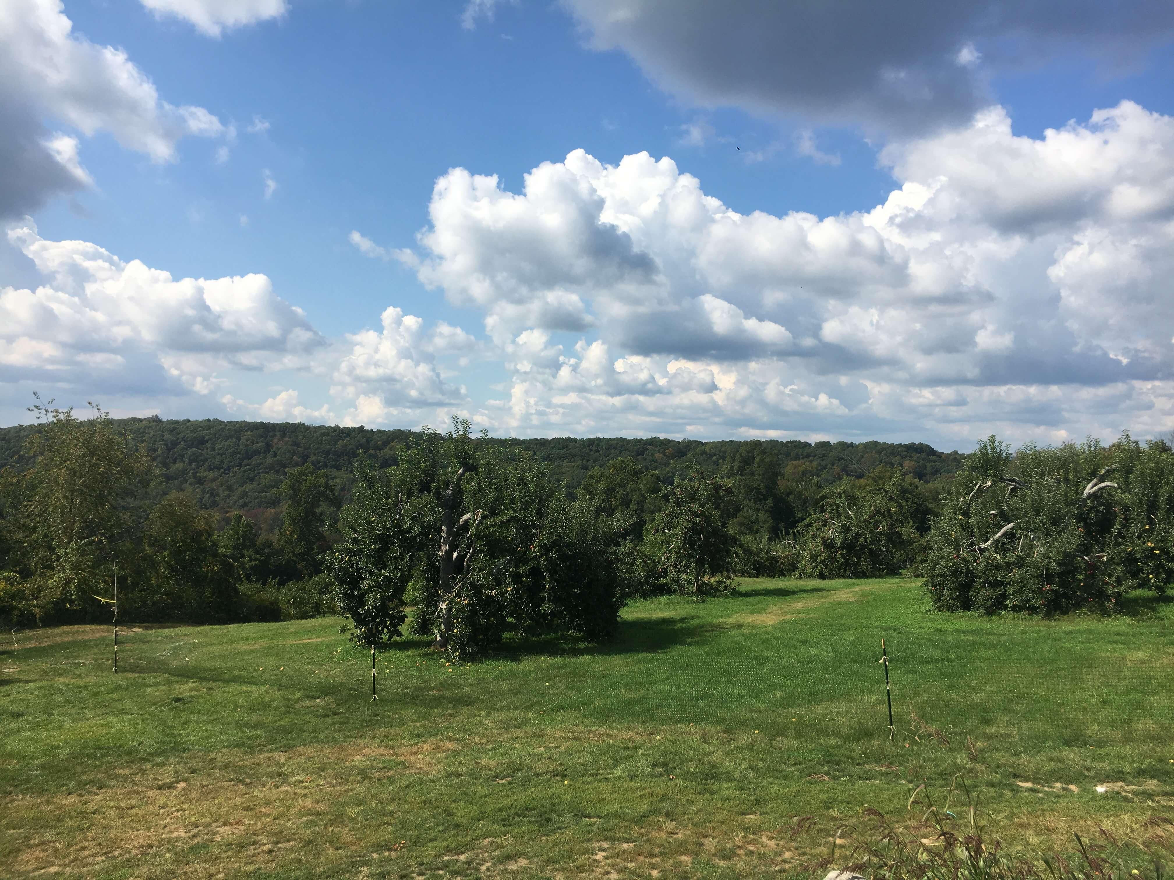 harvest moon apple picking castle like views