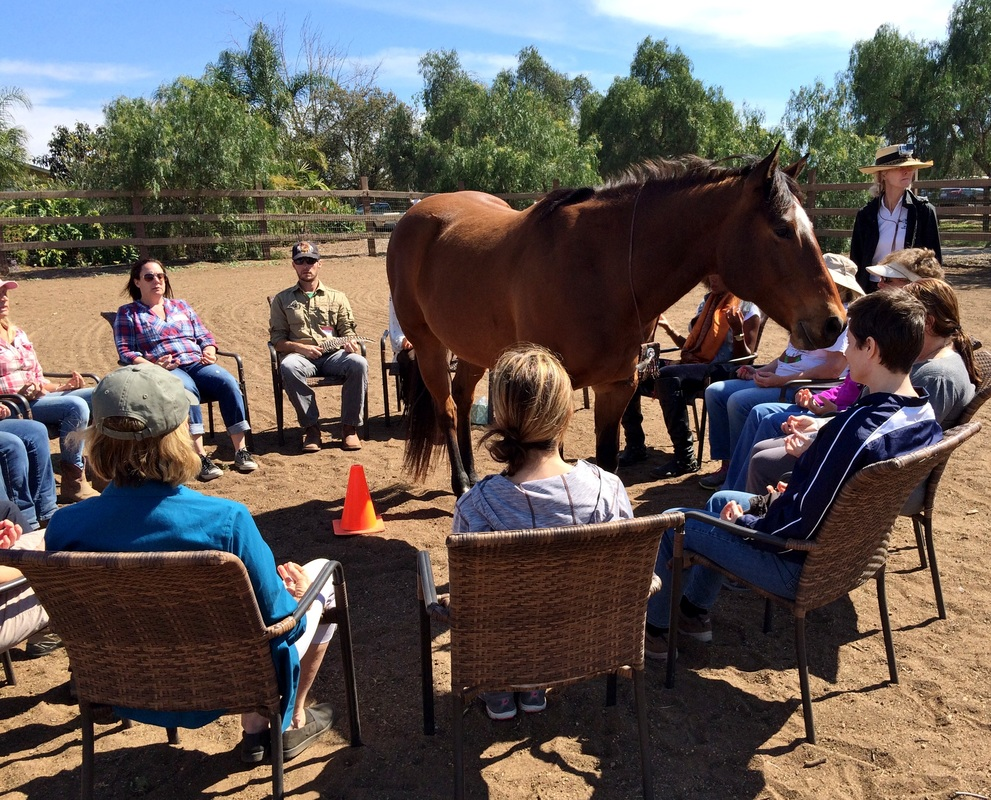 The Bergen Equestrian Center: A Place to Meditate, Recover, and Communicate!