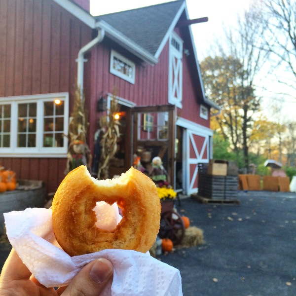 Apple Cider Donut at Thompson's Cider Mill in New York | TheWeekendJetsetter.com