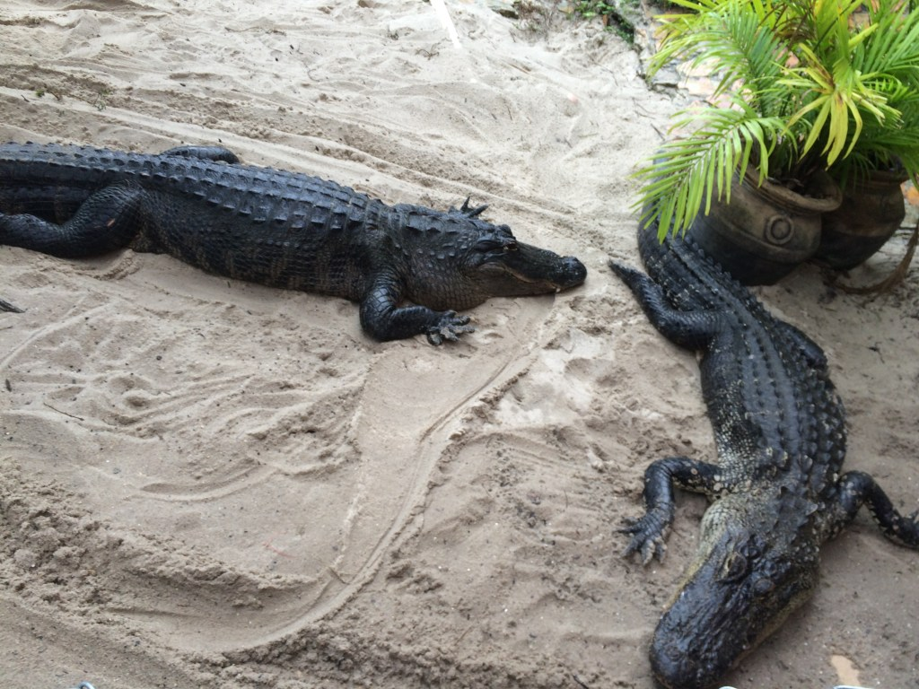 Everglades Holiday Park - Things to do in Fort Lauderdale | TheWeekendJetsetter.com