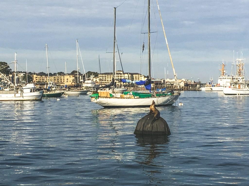 Sea lion sunbathing in Monterey Bay | TheWeekendJetsetter.com