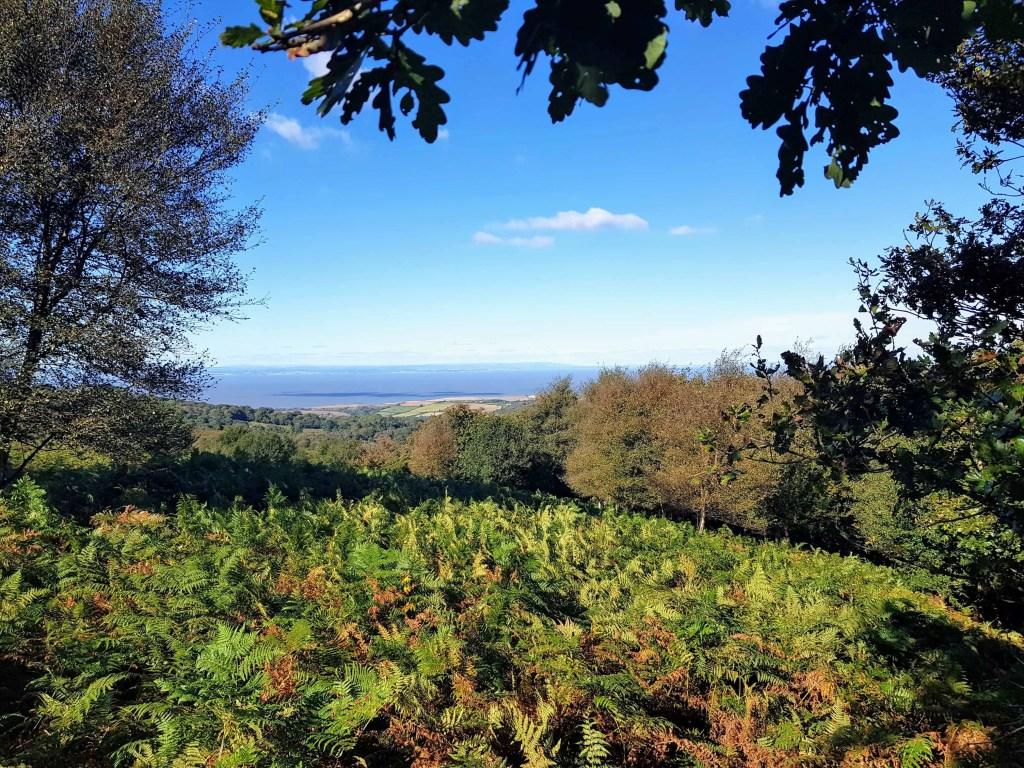 Quantock Hills View