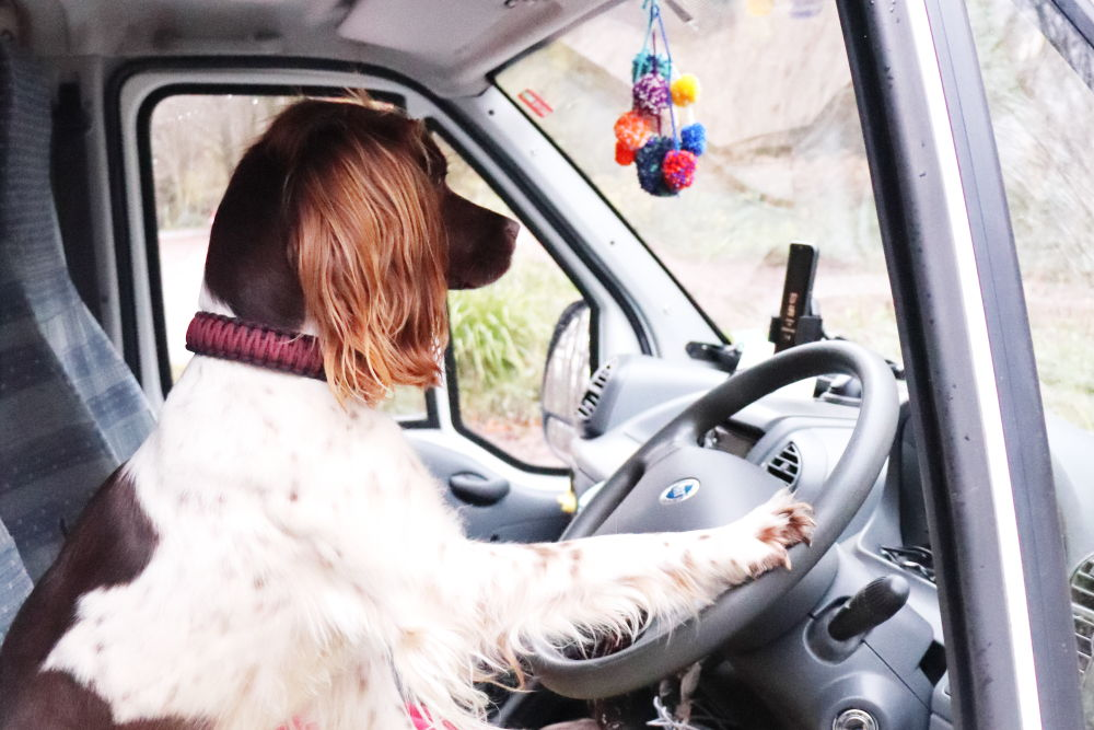 Road Trip Dog