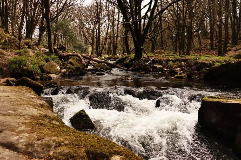The river at Golitha Falls