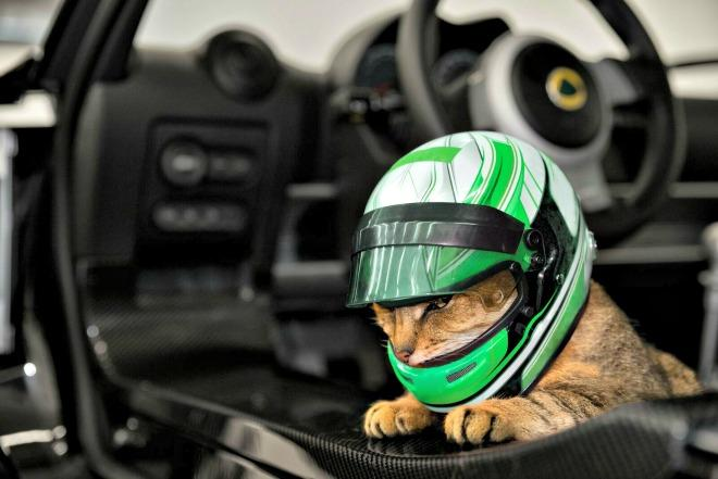 Lotus has introduced a new line of cat helmets.