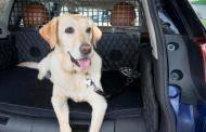 Nissan goes to the dogs with luxury, safety plushness