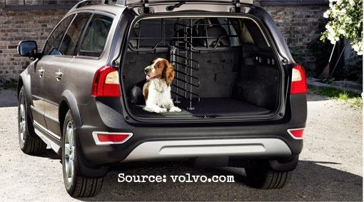 10 Best Cars Gone to the Dogs 1