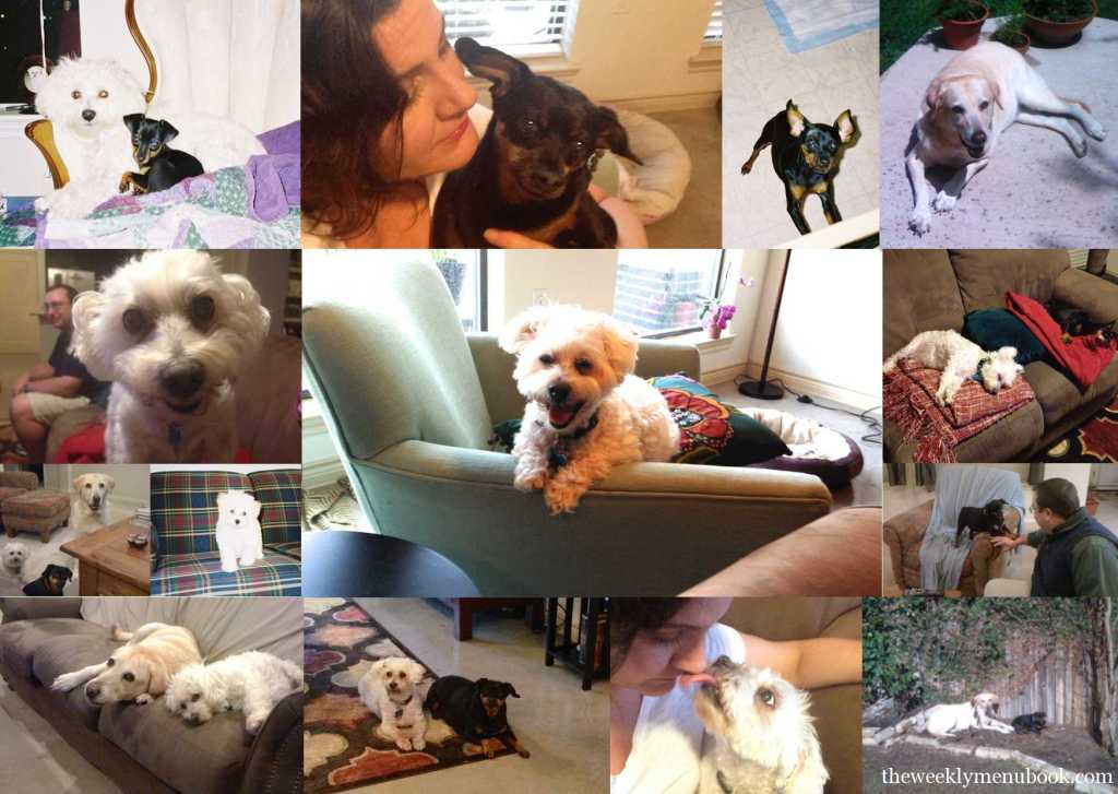 Dog Collage of Benji, Cassidy and Sunny