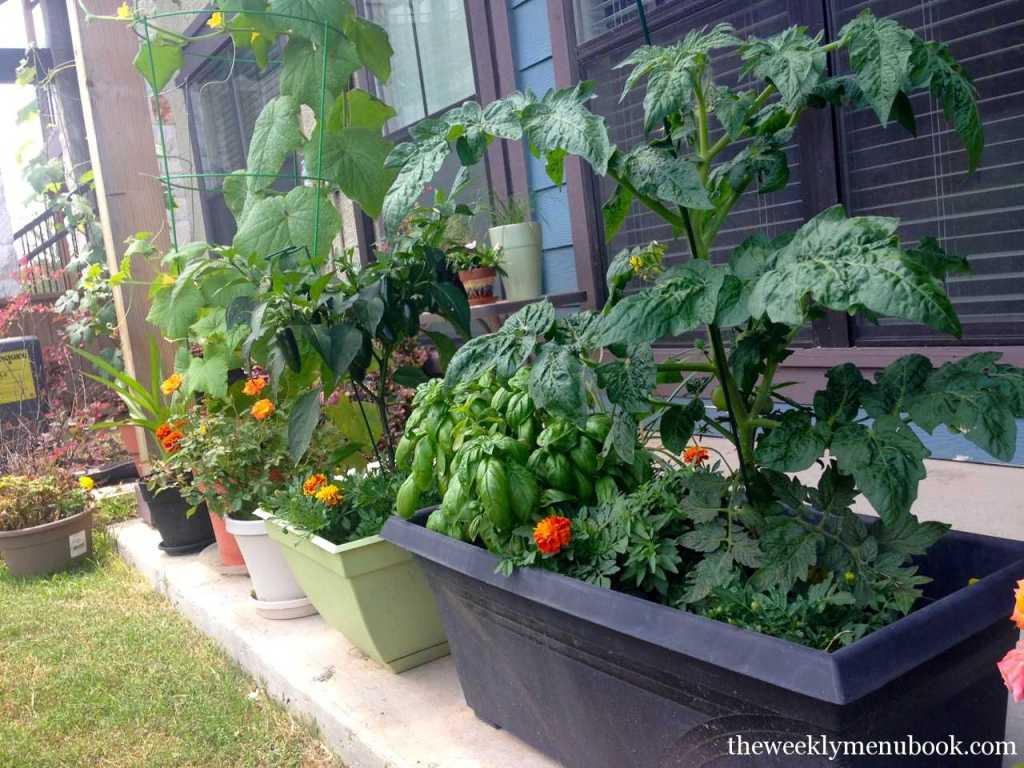 small urban patio garden from deana at the weekly menu blog