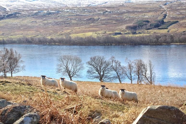 Loch Freuchie Circuit
